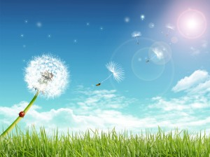 Amazing-Summer-Wallpapers-HD
